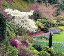 celebrating our beautiful earth, flowers, gardening