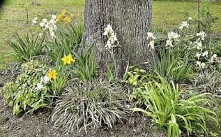 mini gardens under white oak trees, flowers, gardening, outdoor living, This is one of the mini gardens beds under our White Oak trees
