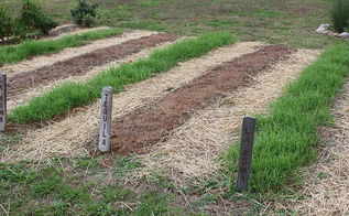 how to breath life this spring into your tired garden soil, gardening, Fall and spring cover crops are a must for replenishing soil
