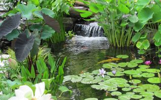 ponds fish ponds backyard ponds, pets animals, ponds water features, Ecosystem ponds can be easy to understand if you have a good grasp of what components go into a basic functioning ecosystem An ecosystem pond works with Mother Nature to provide food shelter and safety to the wildlife around it It also provides you with an all natural low maintenance piece of paradise It s important to remember however that every piece of the ecosystem puzzle must be present in order for a true ecosystem to be in place Eliminate one of these elements and you ve got an unbalanced ecosystem that won t be so low maintenance anymore Check out the things you ll need to get your ecosystem pond fired up Check us out at or call 301 821 7777 Here is a small pond renovation by Premier Ponds in Bowie Prince George s County MD Check out the album photos