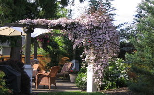need some inspiration for revving up your arbor or pergola this spring we think, gardening, outdoor living