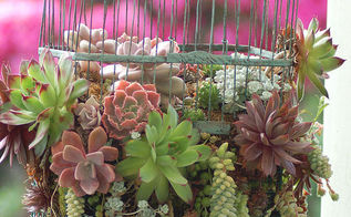 have an old birdcage like succulents, flowers, gardening, repurposing upcycling, succulents, From