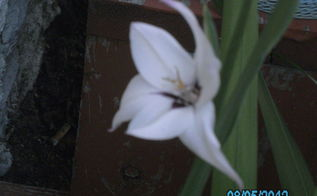 my photos are about flowers, flowers, gardening, my lilies can u ttell me why there so small
