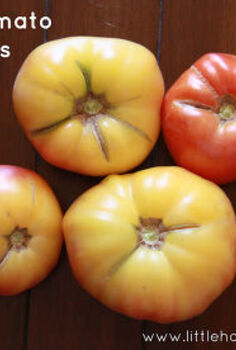 solving problems with your tomatoes, gardening, homesteading