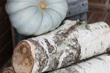business in the front party in the back fall porch decor for all, porches, seasonal holiday decor, Cinderella pumpkin on birch logs