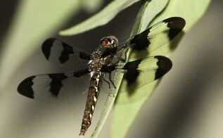my dragonfly, pets animals