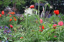 turn an old table into a plant support, gardening, repurposing upcycling, I love the giant poppies but they sprawl so wide they can smother the plants around them