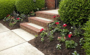 summer annuals 2014 patching grass successfully, flowers, gardening