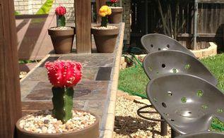 garden photos 2013, gardening, outdoor living, Cactus