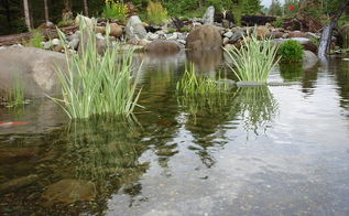 customer photo story, outdoor living, pets animals, ponds water features
