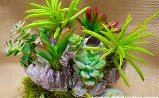 seashells and succulents, flowers, gardening, succulents, Seashells and succulents