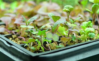 how to pot up your seedlings, gardening, homesteading