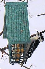 homemade suet for feeding birds in winter, diy, outdoor living, pets animals