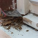 how to repair a rotten window sill, home maintenance repairs, how to, windows, The first step in making the repair is to chip out the rotten wood with a 3 in 1 tool