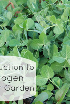 introduction to nitrogen in your garden, gardening, homesteading