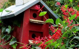 may garden birdhouses amp flowers, flowers, gardening, Birdhouse with Lonicera vine