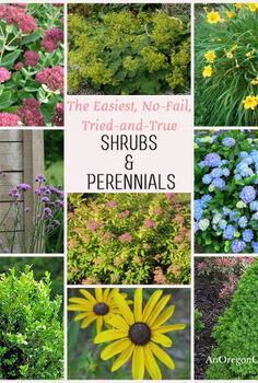 tried and true shrubs amp perennials, flowers, gardening, hydrangea, perennials, The easiest no fail tried and true shrubs perennials