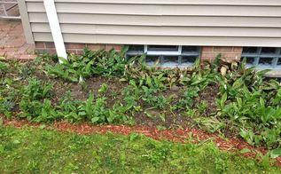 weeds growing everywhere, gardening, Weeds growing with Packasandra