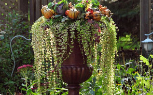 a quick fall update for container plantings, container gardening, flowers, gardening, perennials, Here my garden urn in late fall I have inserted several cabbages and have added a few floral picks