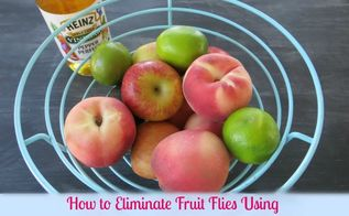 how to eliminate fruit flies for good, crafts, go green, pest control, We used Heinz Apple Cider Vinegar to get rid of FruitFlies