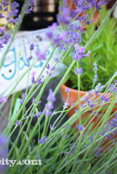 signs of the thymes, gardening, Herb Garden