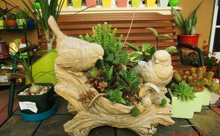 my new hobby collecting different kinds of succulent plants, flowers, gardening, home decor, succulents, my center piece