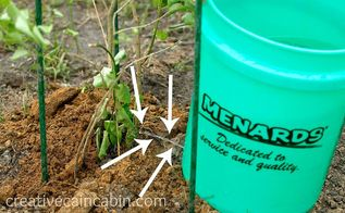 how to water a tree for guaranteed survival, gardening, Carry over to the transplant pull the nail and direct the small stream of water towards the stem Do this morning and evening for 2 weeks I have never lost a tree using this method