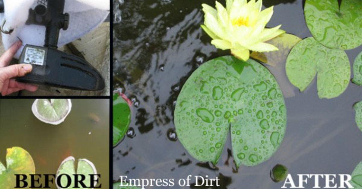 Easy Trick For A Sparkling Clean Pond Hometalk