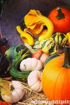 using gourds in your fall planters, gardening, seasonal holiday decor, Picked all these gourds myself