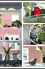 add glass shelves to any window with good sunlight to turn it into a greenhouse, home decor, shelving ideas, windows, My personal greenhouse located above my kitchen sink The possibilities are endless Displaying nicknacks plants or herbs