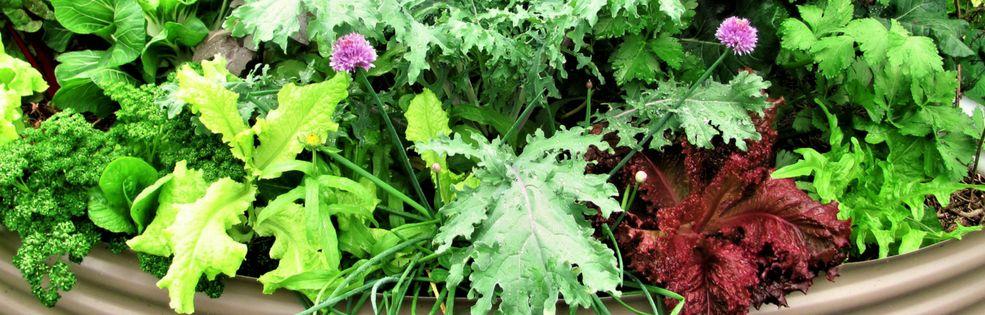The Micro Gardener - Anne cover photo