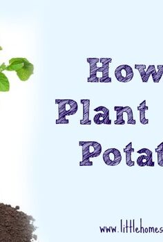 how to plant seed potatoes, container gardening, gardening, homesteading