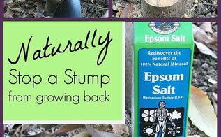 how to stop stumps from growing back naturally, gardening
