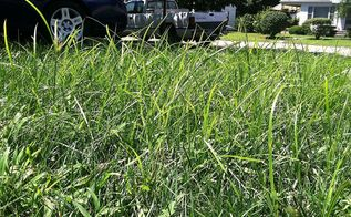 these weeds have pushed me over the edge what are they, gardening