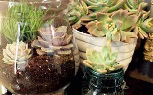 diy succulent terrarium, container gardening, flowers, gardening, succulents, terrarium, Easy Succulent Centerpiece