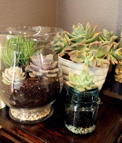 diy succulent terrarium hometalk. Black Bedroom Furniture Sets. Home Design Ideas