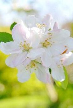 apple week at the nest, gardening, How to Care for Fruit Trees maygarden garden gardening diygarden
