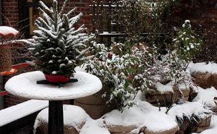 urban garden winterizing update part three, container gardening, flowers, gardening, seasonal holiday d cor, urban living, wreaths