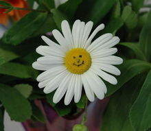 welcome spring, flowers, gardening, I found this happy flower in my garden See more landscaping to make you smile