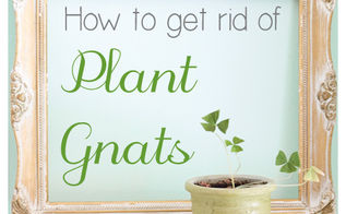 how to get gnats out of house