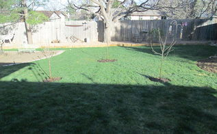 staking semi dwarf apple trees, gardening