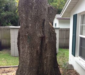 Decorating Ideas For A Large Tree Stump, Gardening, Outdoor Living