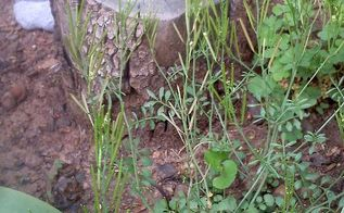 q this weed can t be good when i reach down to pull it or even brush against it it, landscape, outdoor living