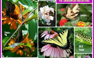 grow these nectar producing plants to attract swallowtail butterflies, gardening, wildlife animals
