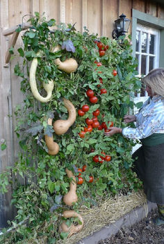 what do you know about vertical gardening, flowers, gardening, You can practically grow your dinner vertically