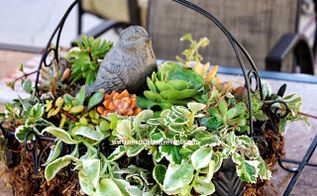 outdoor succulent patio table centerpiece, flowers, gardening, home decor, succulents, Outdoor patio table centerpiece with succulents clippings from other succulents from the yard