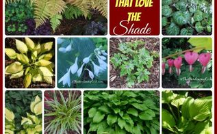 20 plants that thrive in the shade, gardening, landscape