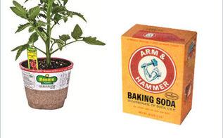 sweeten your tomatoes with baking soda, gardening