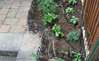 backyard gardens, gardening, Herb garden 2014