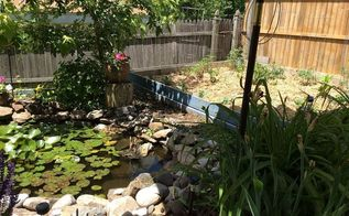 from pool to pond, landscape, ponds water features